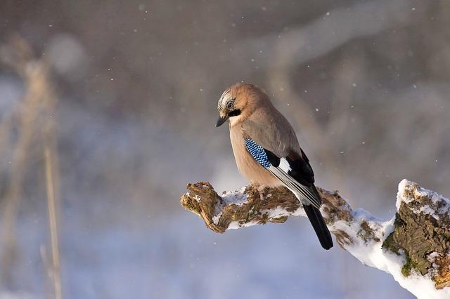 dreamdiary-birds
