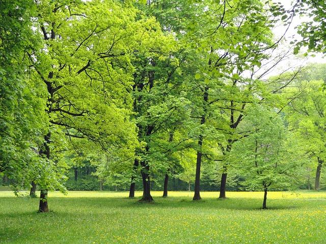 dreamdiary-tree