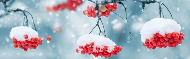 dreamdiary-Snow Furitsumoru to quiet