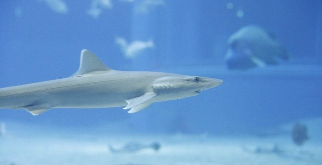 dreamdiary-shark