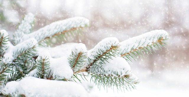 dreamdiary-snow