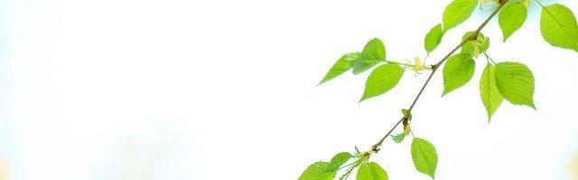 dramdiary-tree-branch