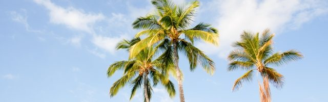 dreamdiary-palm-tree