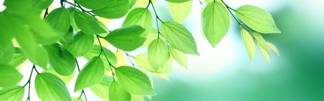 dreamdiary-leaf