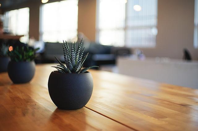 dreamdiary-plant