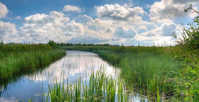dreamdiary-river