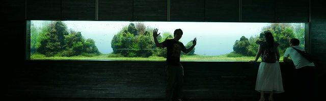 dreamdiary-Aquarium