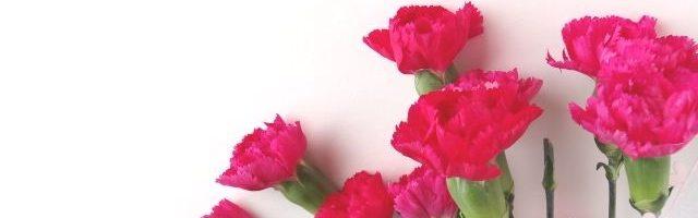 dreamdiary-Carnation