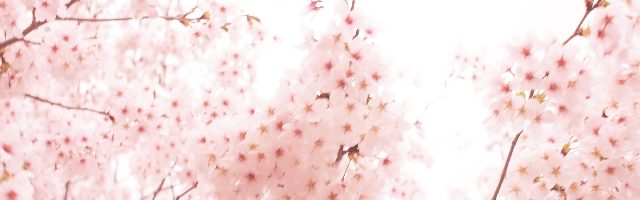 dreamdiary-Cherry Blossoms