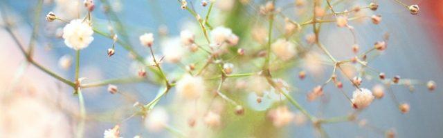 dreamdiary-Kasumi grass