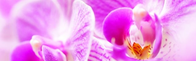 dreamdiary-Orchid