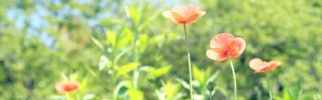 dreamdiary-Poppy