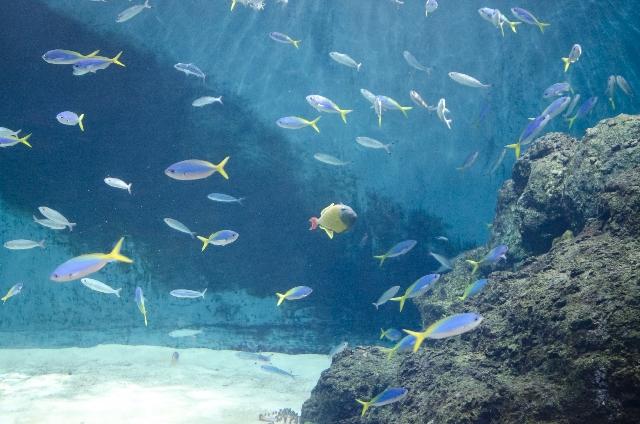 dreamdiary-aquarium-fish-goldfish