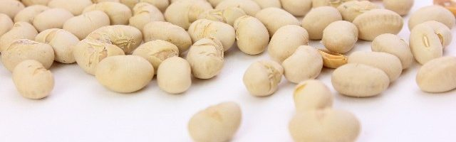 dreamdiary-beans