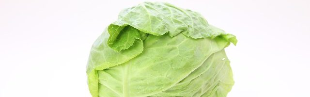 dreamdiary-cabbage