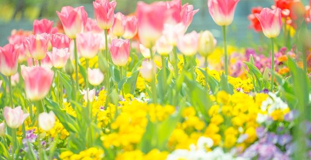 dreamdiary-flower