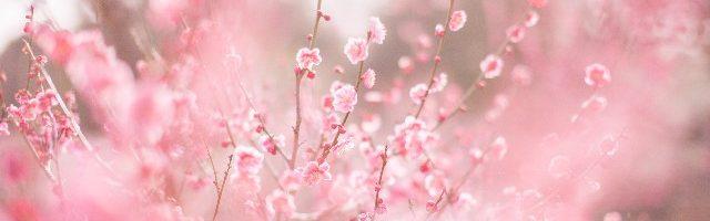 dreamdiary-plum