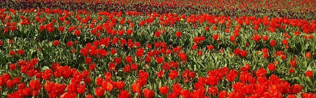 dreamdiary-one-side-of-the-flower-garden